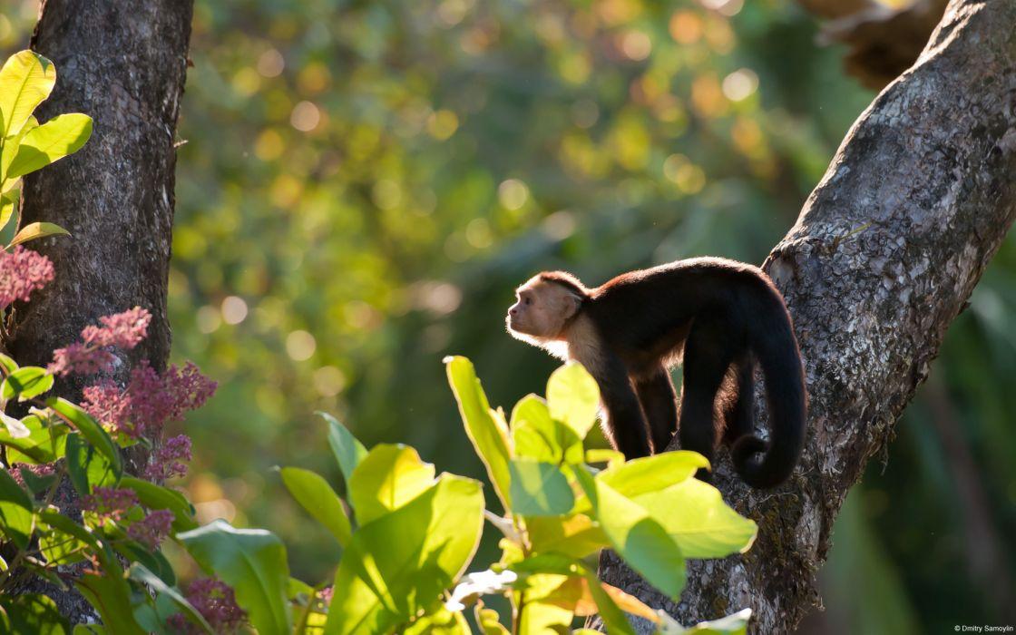 monkey  trees wallpaper