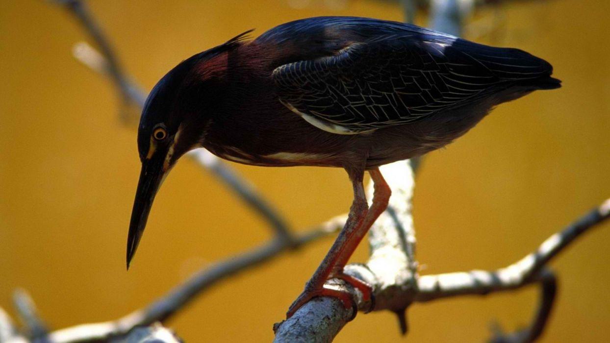 nature florida national park birds wallpaper