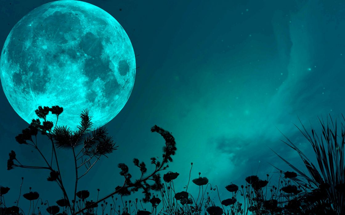 night sky moon shadows grass blade stars wallpaper