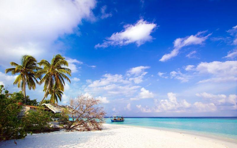sea beach palm trees landscape wallpaper