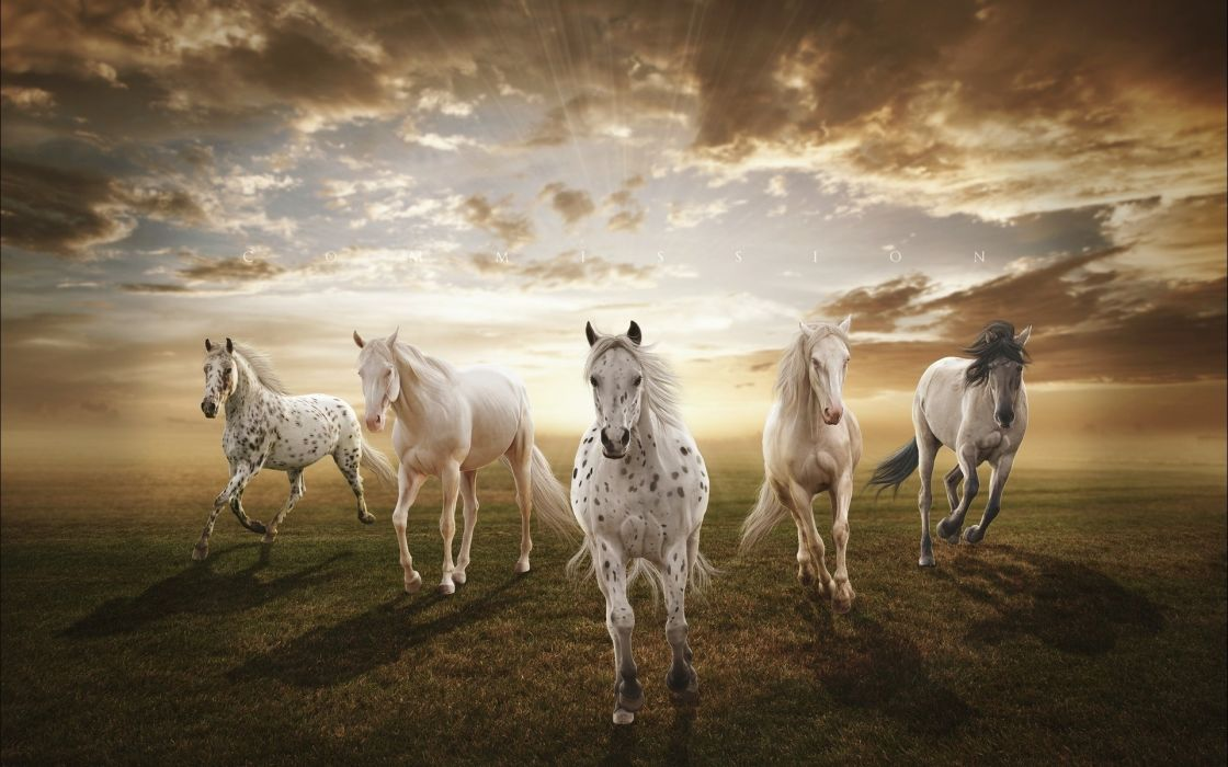 sunset horses wallpaper