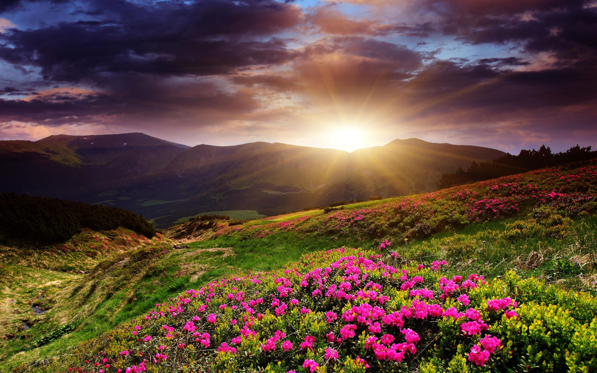 Sunset mountains flowers landscape wallpaper 1920x1200 for Flower landscape