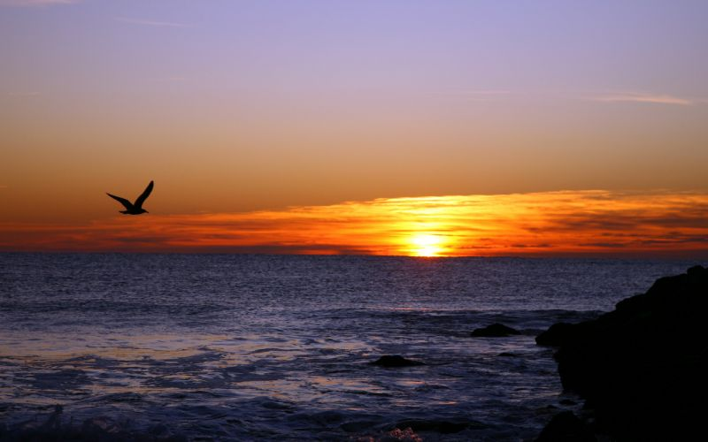 sunset sea seagull landscape birds wallpaper