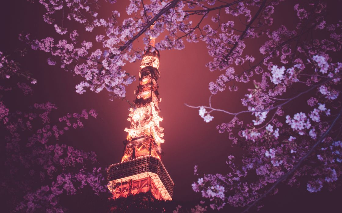 Tokyo Tower Tokyo Cherry Blossom Tree Flowers Night Lights wallpaper