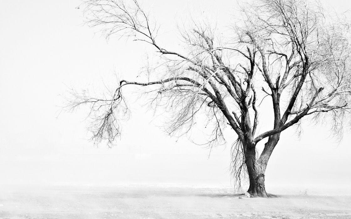 Tree Snow Winter BW wallpaper