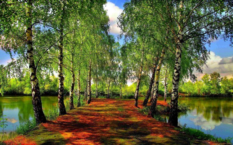 trees lake wallpaper