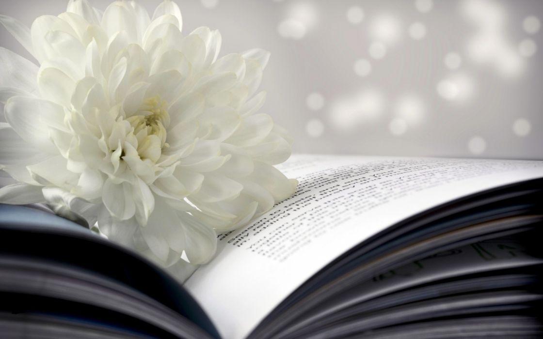 chrysanthemum flowers mood books bokeh text wallpaper