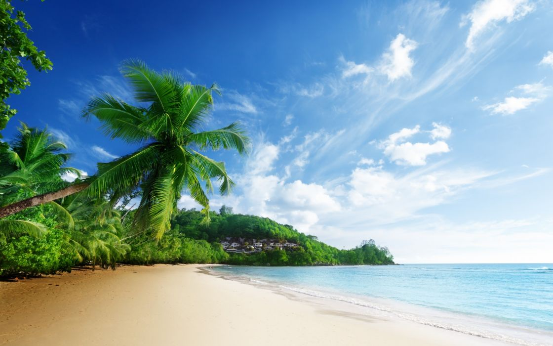 nature scenery sea beach sky clouds palm trees ocean tropical wallpaper
