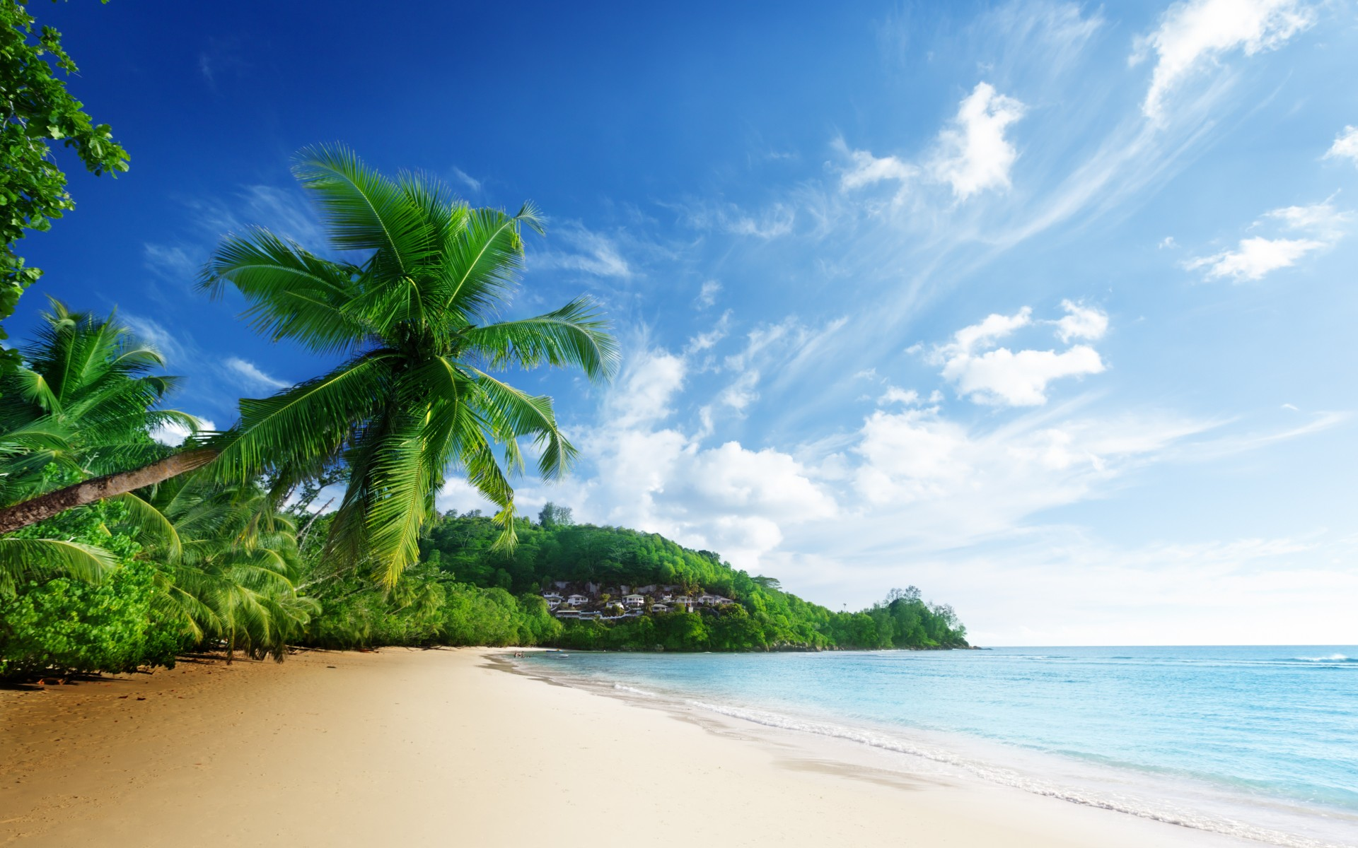 tropical palms beach wallpapers - photo #26
