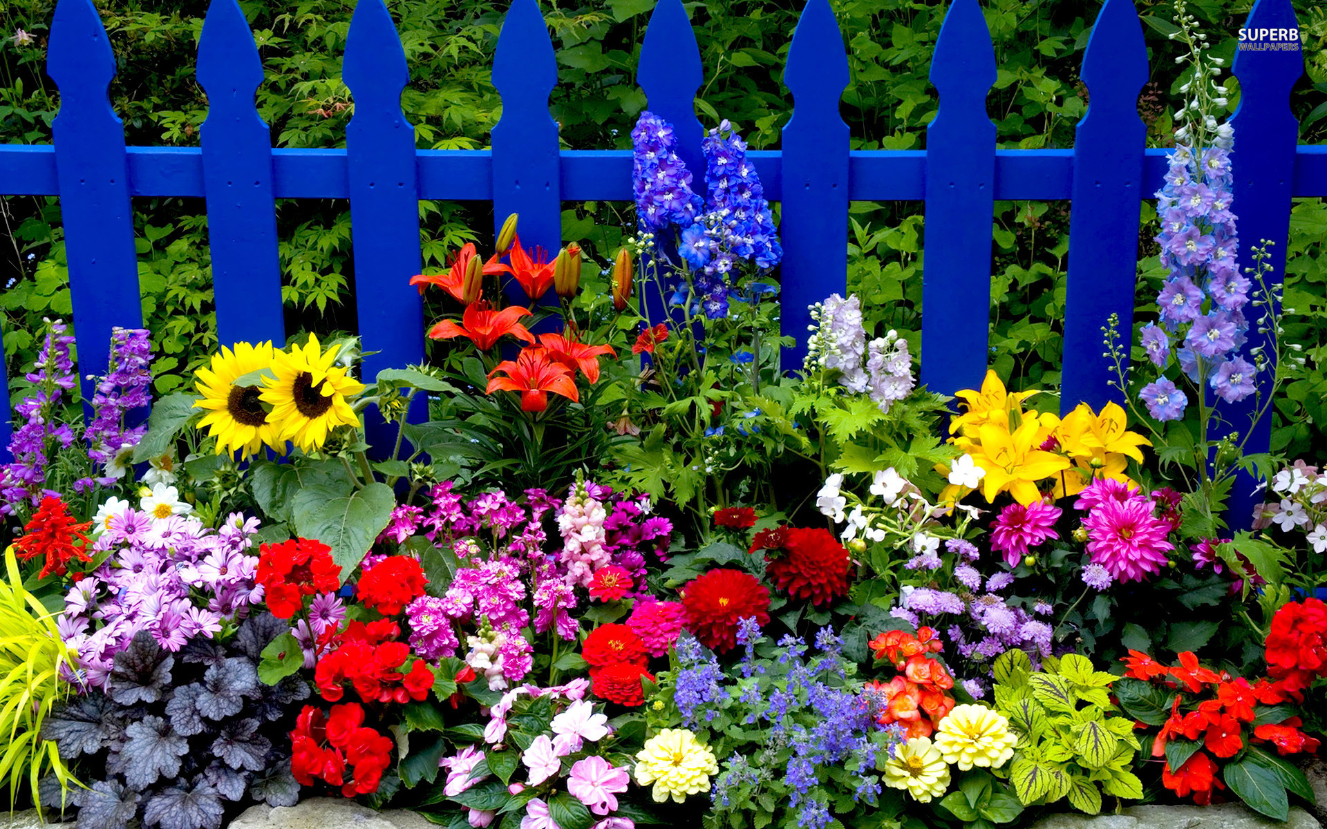 Summer Flowers wallpaper | 1920x1200 | 71955 | WallpaperUP
