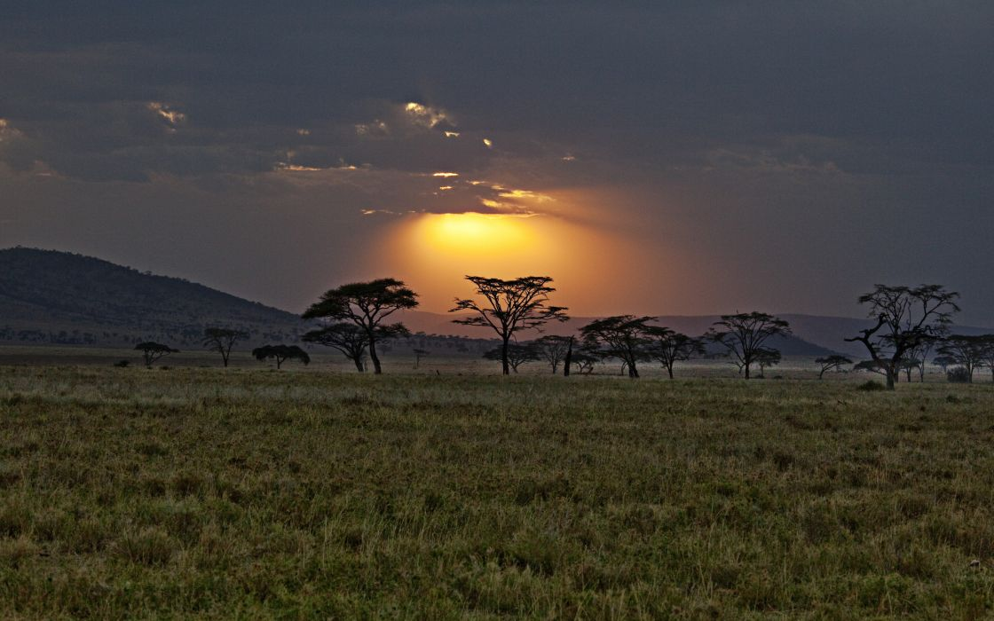sunset Africa savanna landscapes sky beams rays trees wallpaper