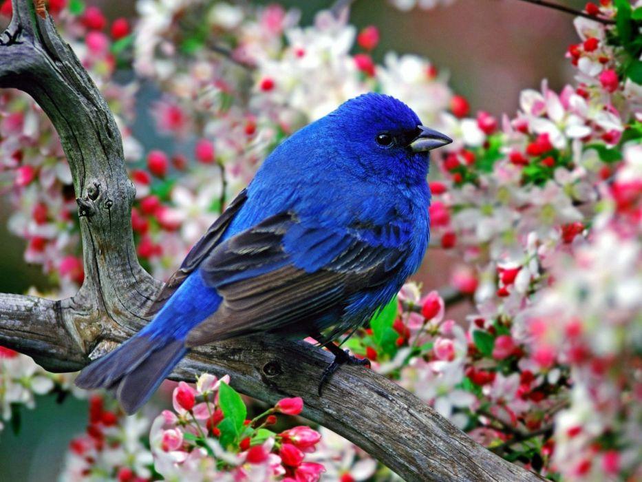 Colorful Little Bird wallpaper