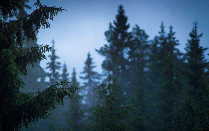 Finland nature forest after rain summer trees wallpaper