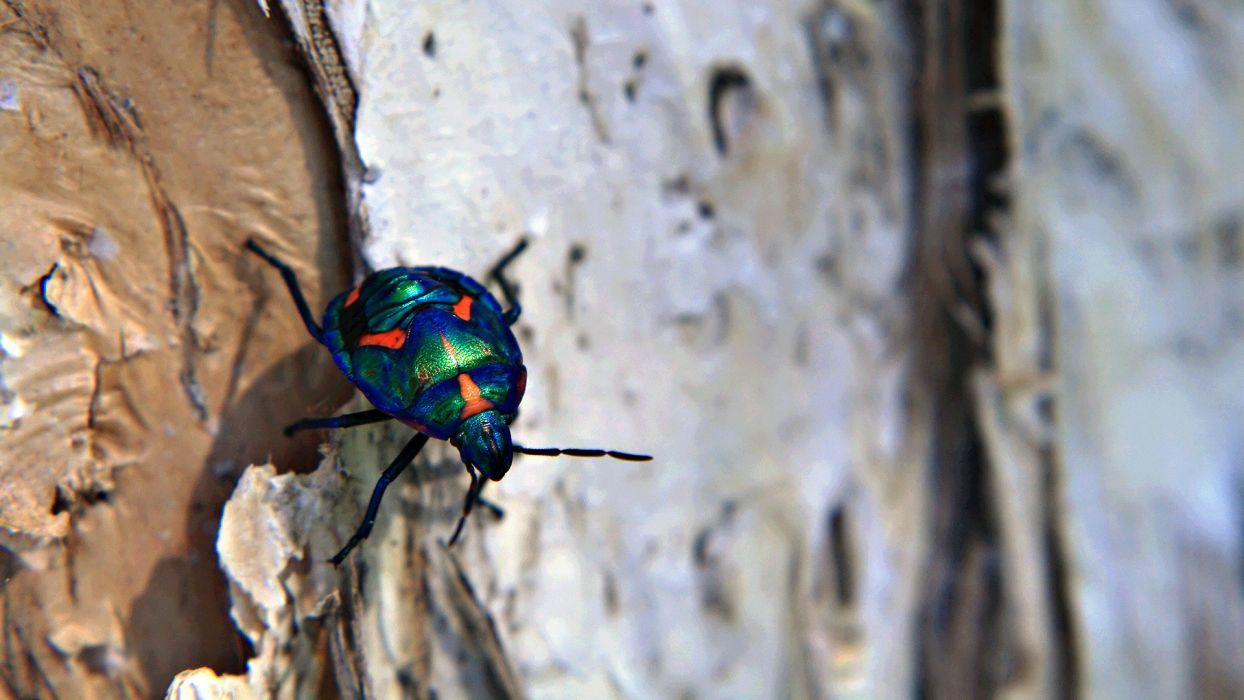 tree  macro  beetle  insect  bark wallpaper