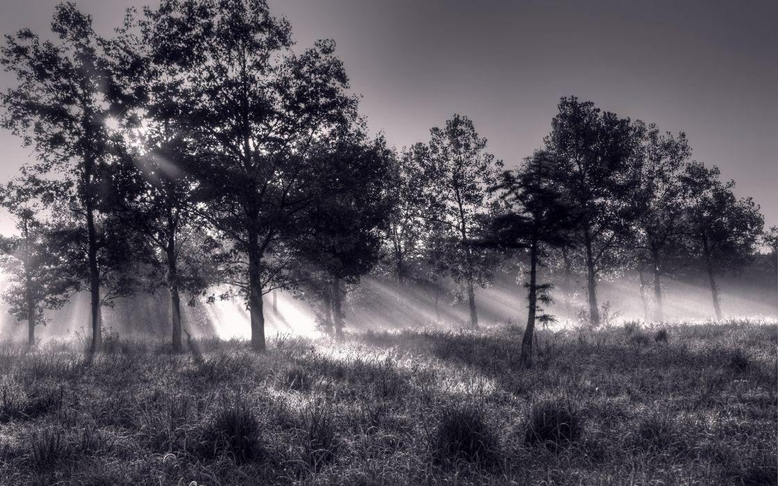 Trees Sunlight Bw Black White Monochrome Sunrise Dew Beams Rays