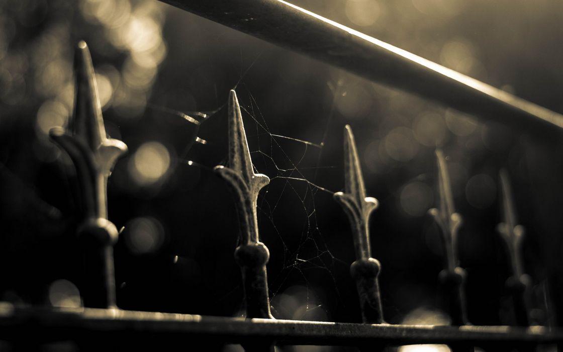 Fence Macro Spider Web black white wallpaper