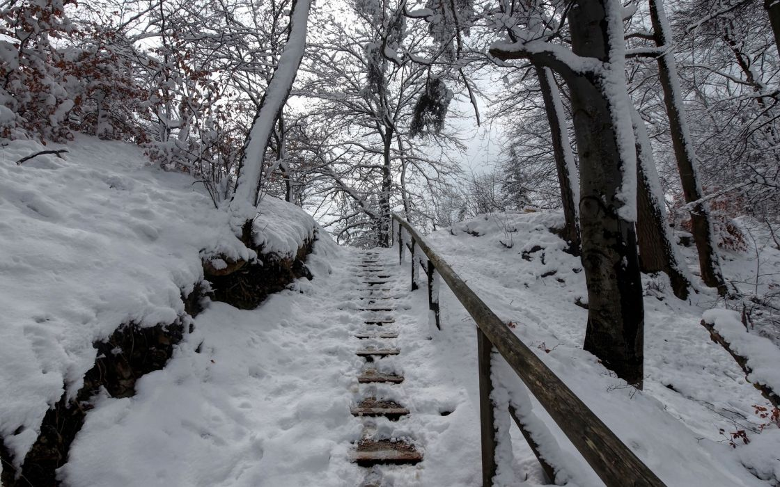 winter forest steps with railings trees landscape wallpaper