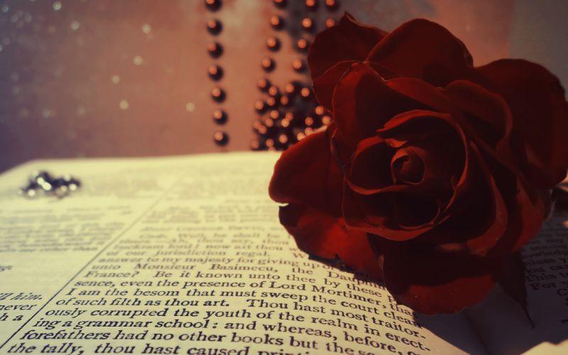 book rose red burgundy flower beads macro bokeh wallpaper
