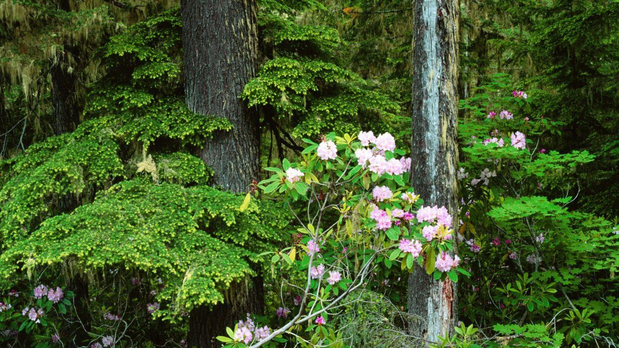 flowers Mount wallpaper