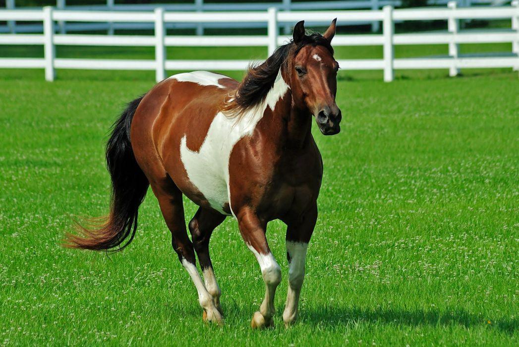 fences animals horses wallpaper