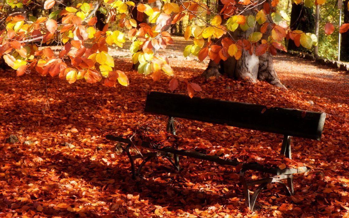 landscapes nature trees autumn wallpaper
