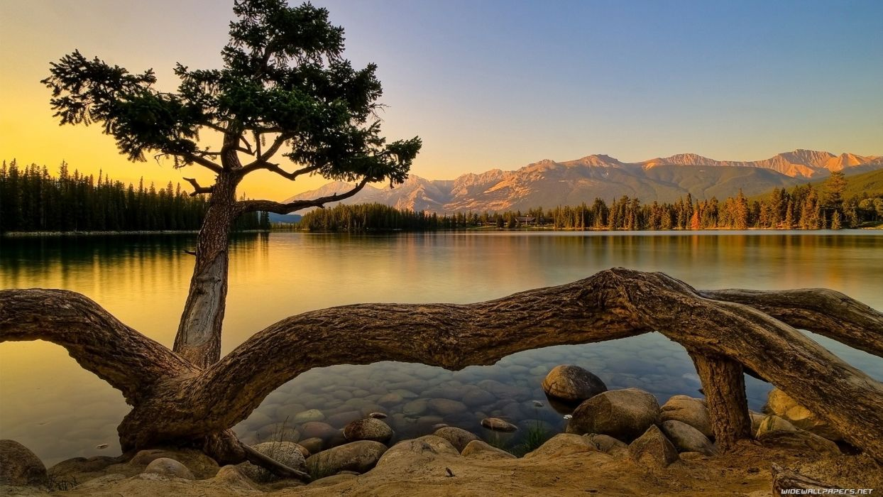 mountains landscapes nature trees wallpaper