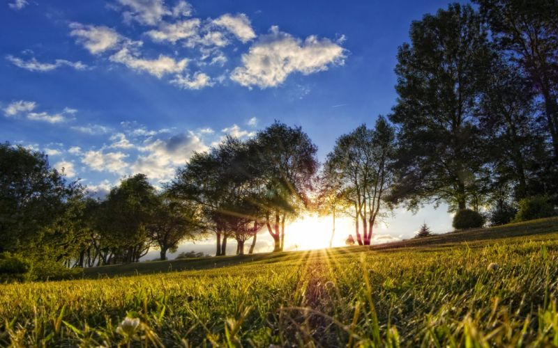 landscapes nature trees fields sunlight wallpaper