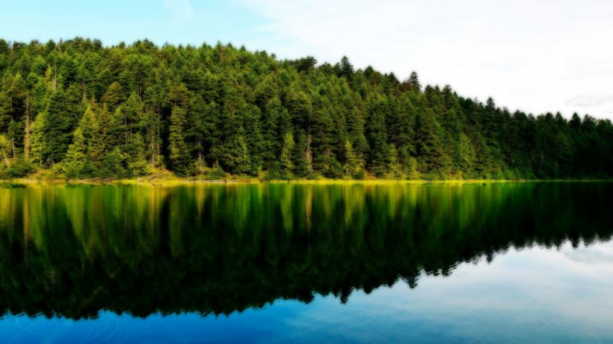 water landscapes forest lakeside wallpaper