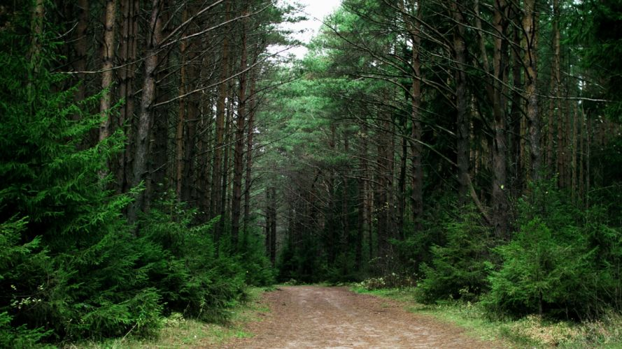 landscapes forest Russia roads trail wallpaper