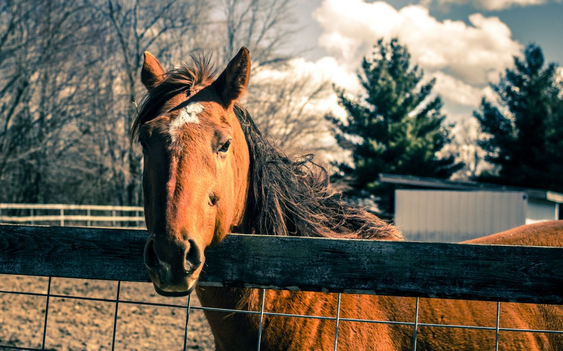 Horse Fence wallpaper