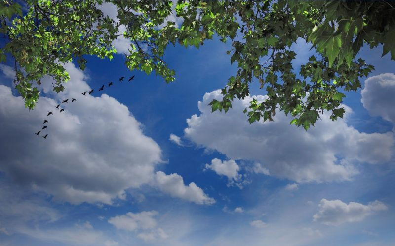 sky birds clouds tree branches nature wallpaper
