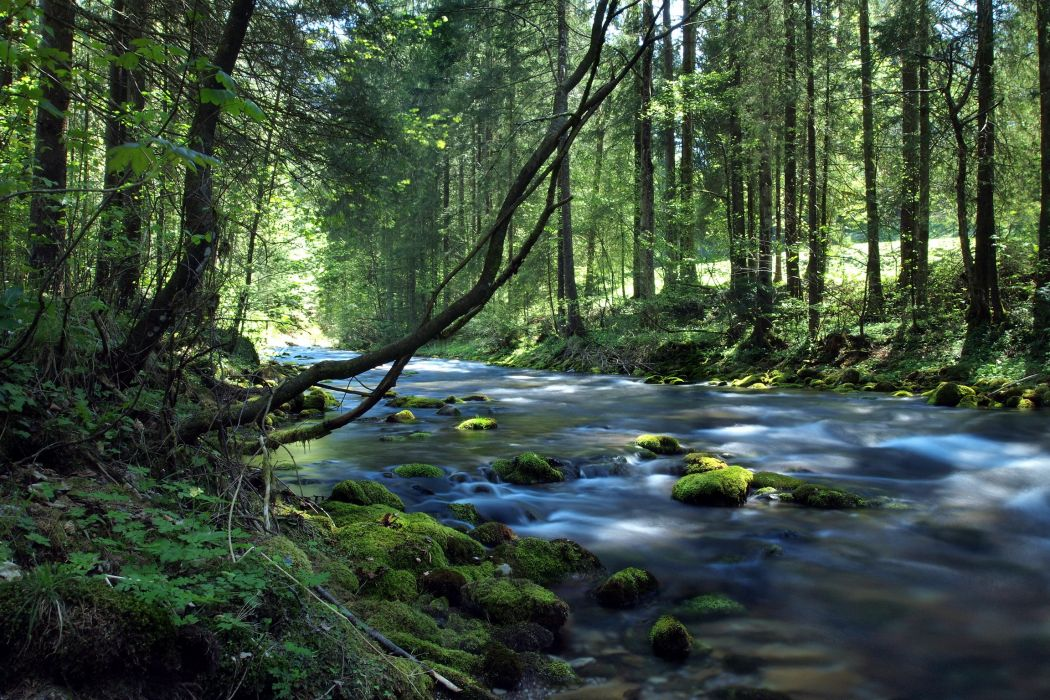 Rivers Forests Stones Salzach Austria Moss Trees Nature wallpaper