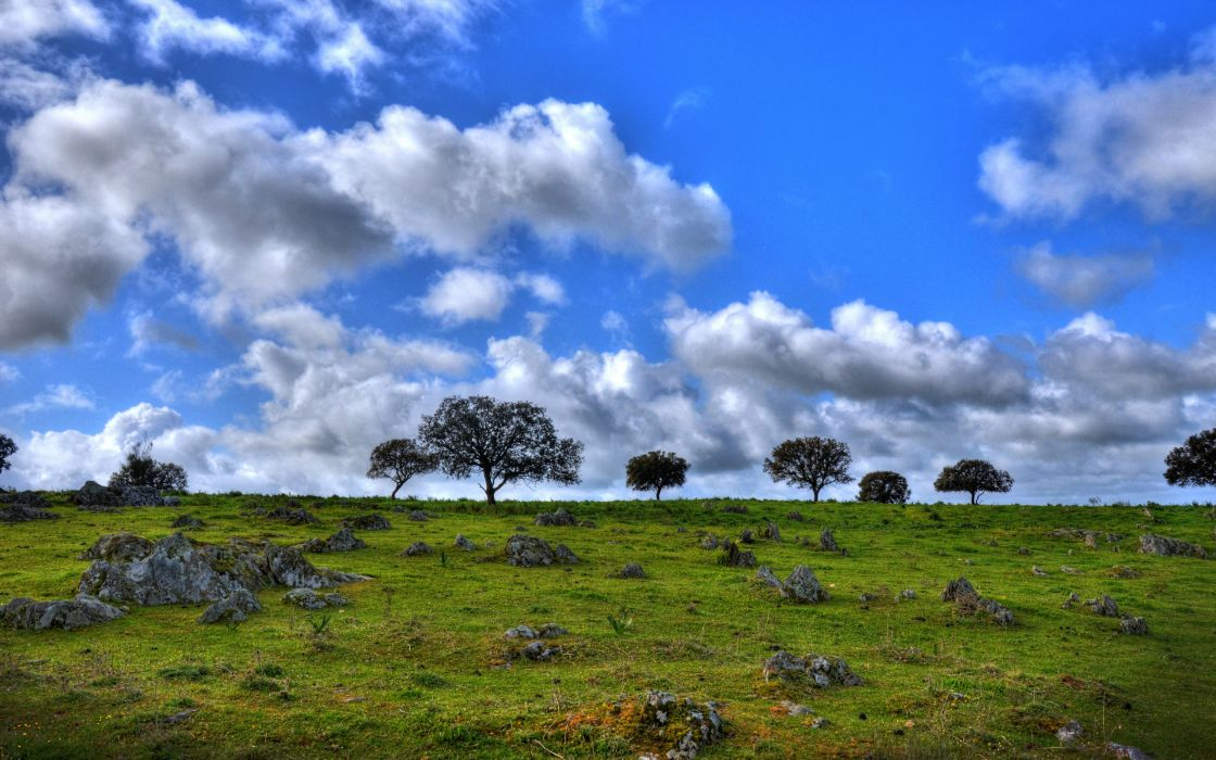 field clouds trees landscape wallpaper