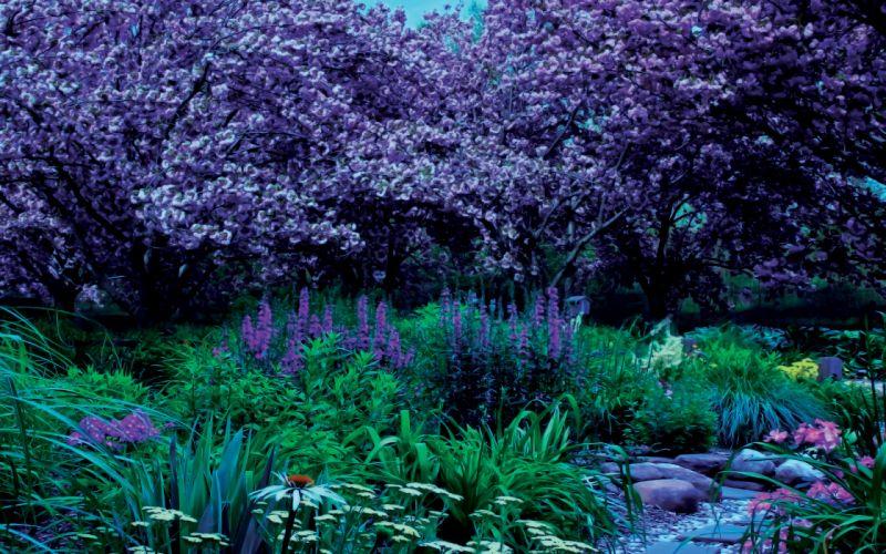 garden plants rocks landscape wallpaper