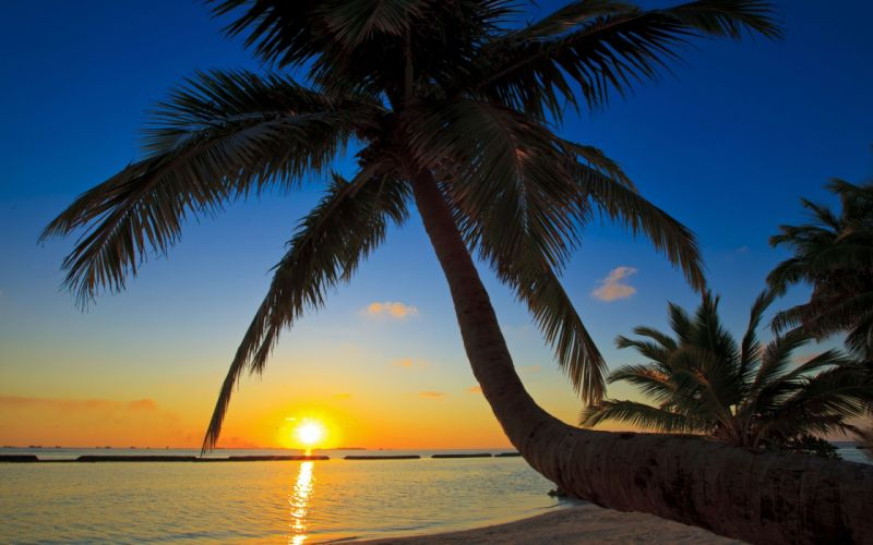 sunset sea palm trees beaches wallpaper