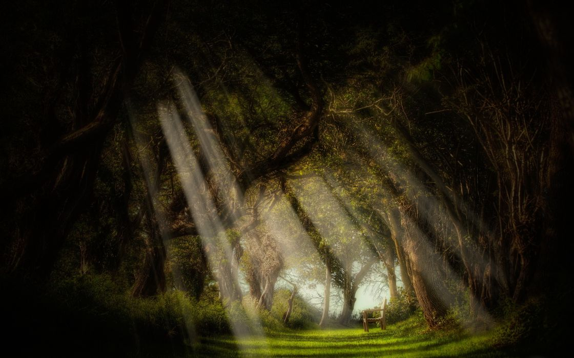 wood benches trees light rays wallpaper