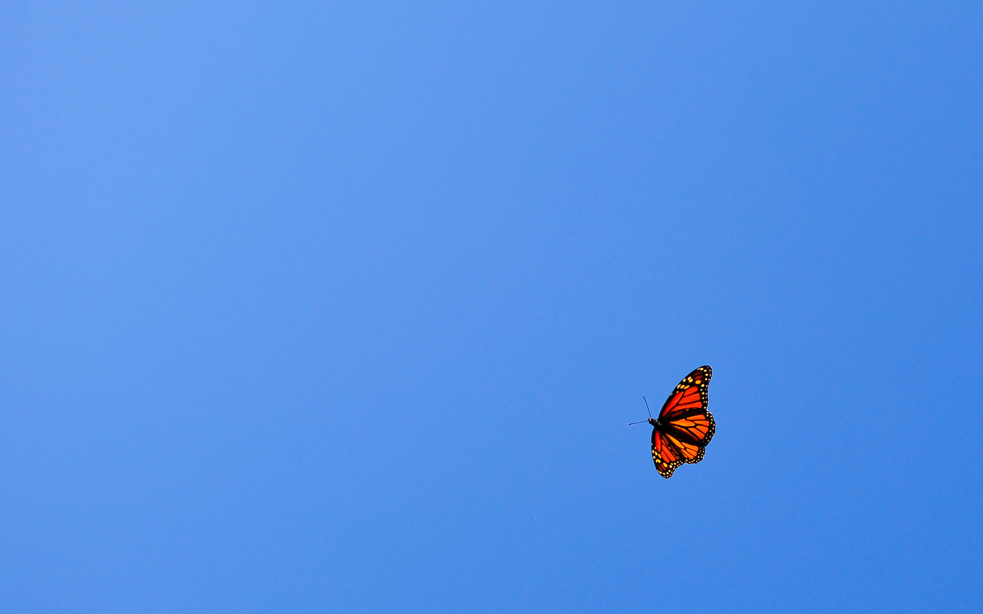 Blue Butterfly Flying In The Sky Flying butterfly orang...
