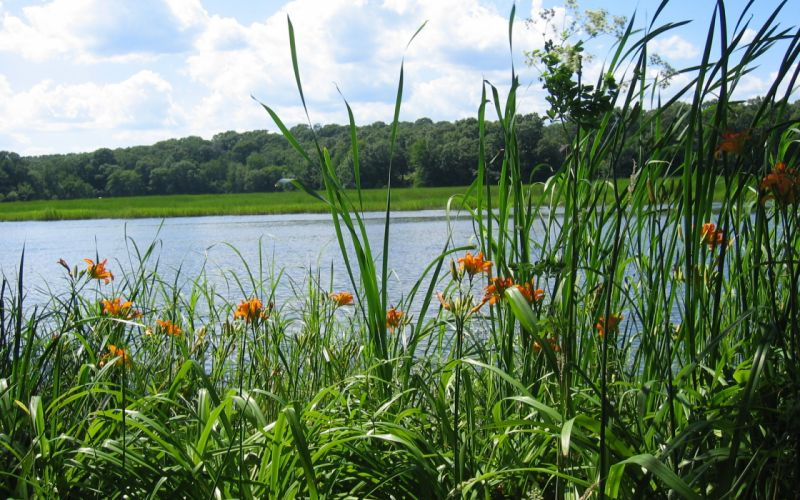 river forest grass nature lakes flowers wallpaper