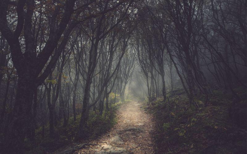 trees forest path dark wallpaper