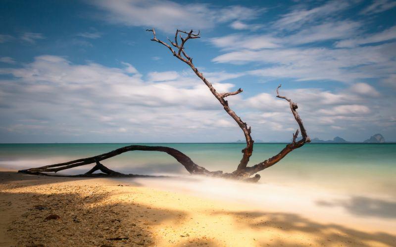 Branch Shore Beach Ocean wallpaper