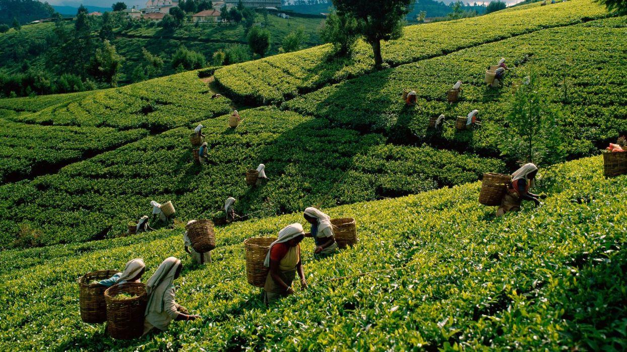 Field Worker people landscapes wallpaper