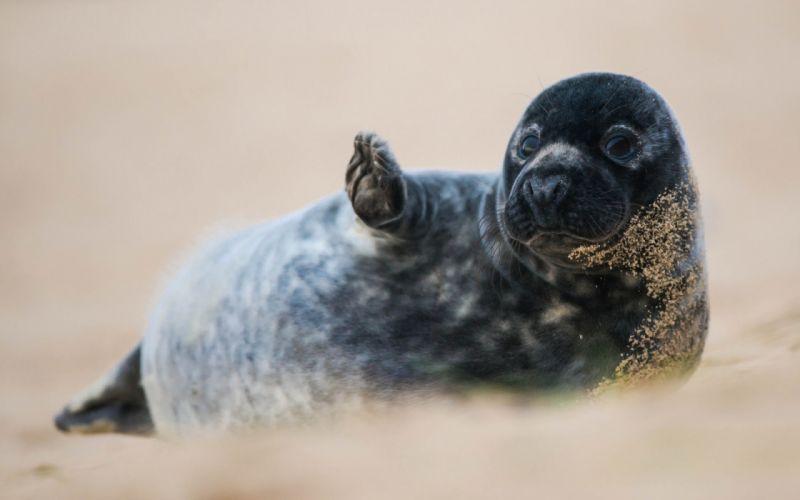 Seal seals wallpaper