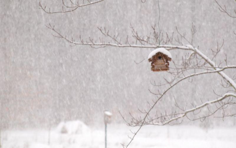 winter storm house snow birds wallpaper
