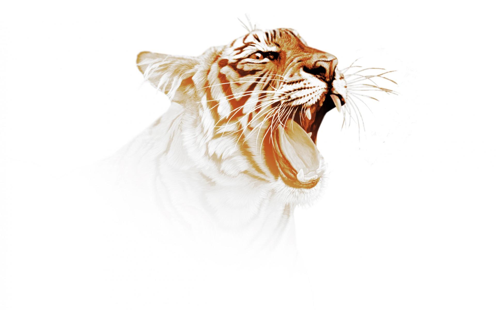 tiger predator art wallpaper | 1920x1200 | 75734 | wallpaperup