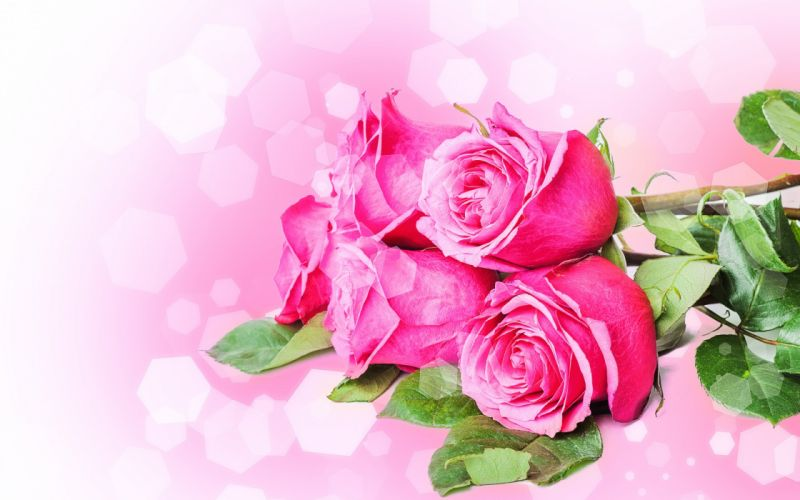 Flowers bouquets roses pink stems petals wallpaper
