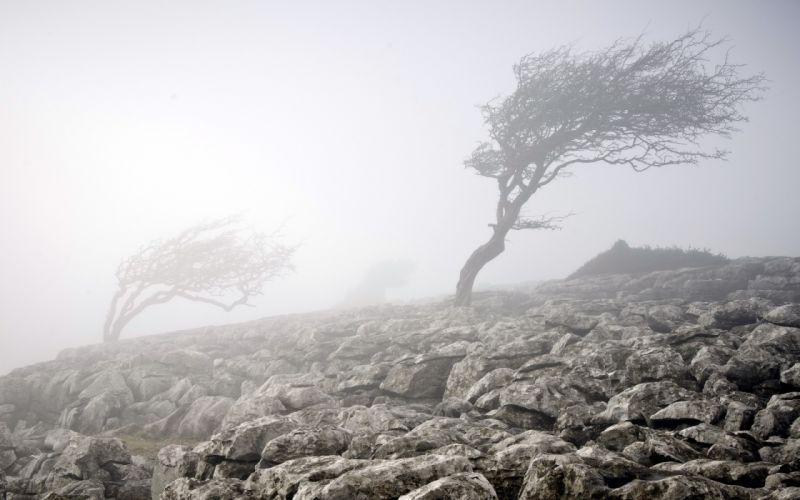 fog wood stones nature wallpaper