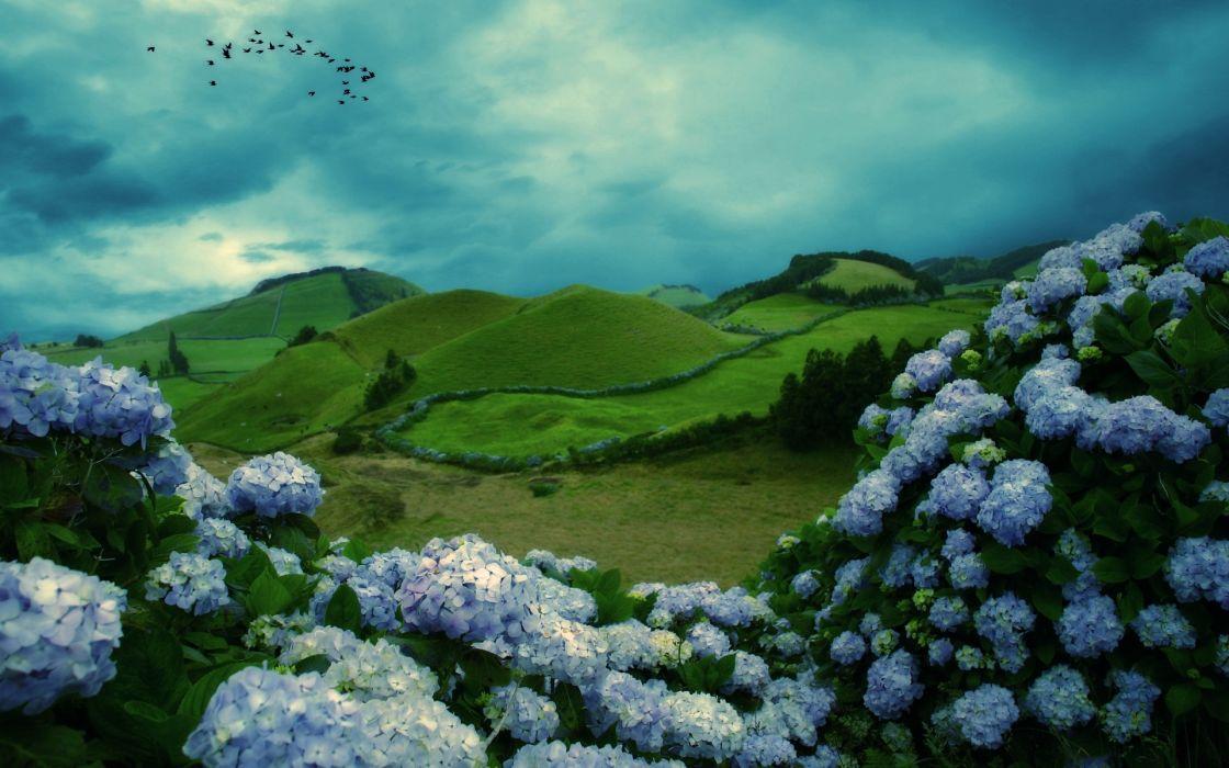 mountains flowers clouds birds wallpaper