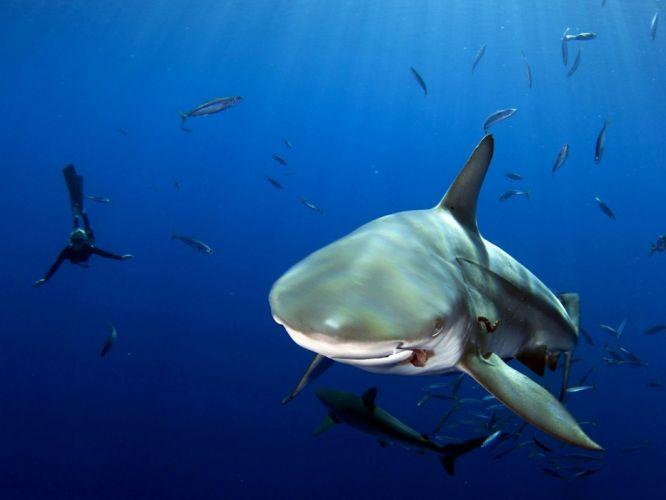 nature shark water fish scuba diver depth wallpaper