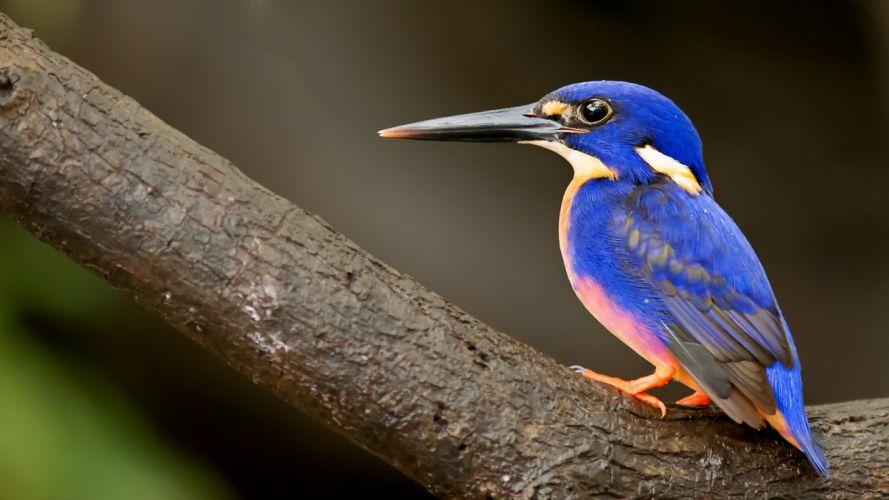 bird nature wallpaper