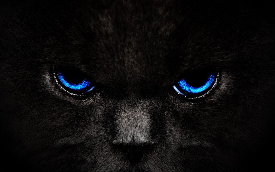 cat black eyes wallpaper